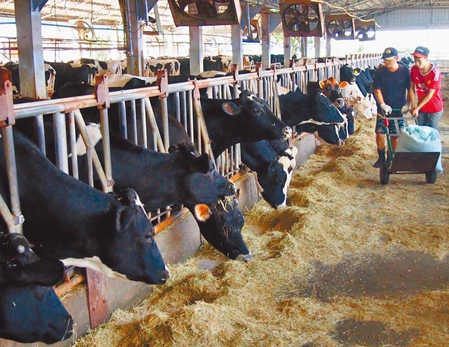 外籍勞工支援乳牛飼育及外展農務服務  改善農業缺工